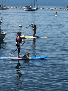 Even this Welsh Corgi enjoys SUP on the Lake. photo by L. Freeman